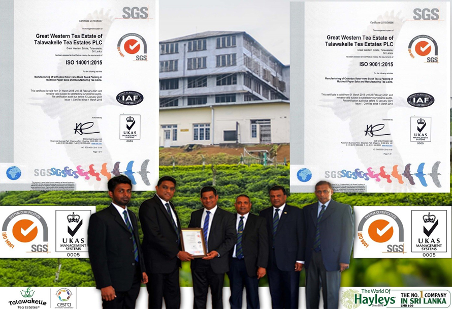 Talawakelle Tea Estates Great Western Estate secures ISO accreditation for environment and quality management