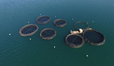 Oceanpick's First Batch of Fledgling Fish for Aquaculture Brings New Hope for Sri Lanka's Fisheries Sector