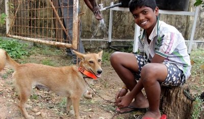 Embark completes successful 3rd phase of Jaffna Animal Protection Project
