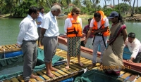 The European Union partners with Food and Agriculture Organization (FAO) to introduce Sea Bass Cage Culture in the Batticaloa Lagoon