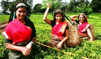 Planters' Association says sustainability of tea industry in the hands of workers
