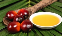 Sustainable oil palm central to the success of Sri Lanka's plantation industry