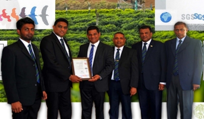 Talawakelle Tea Estates' Great Western Estate secures ISO accreditation for environment and quality management