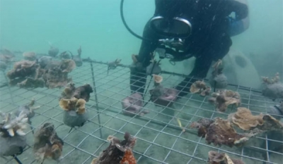 Foundation of Goodness – latest to partner Tokyo Cement to restore Southern Coral Reefs