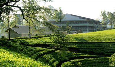 All tea estates of Watawala Plantations now Rainforest Alliance certified